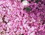 "Blog update: ""Spring♪"""